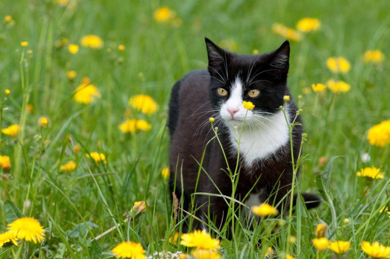 Kat udenfor