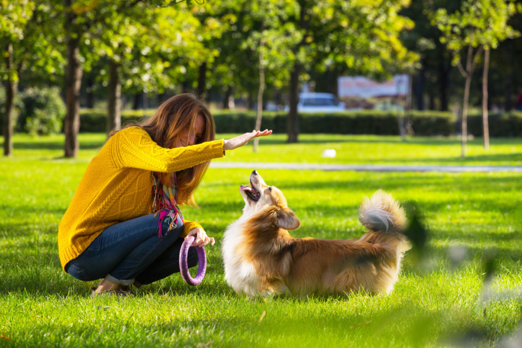 Leg med hunden i parken