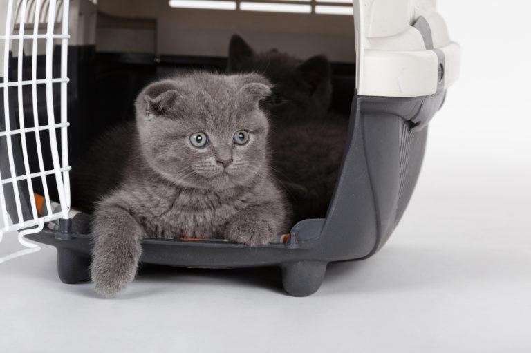 beroligende medicin til katte