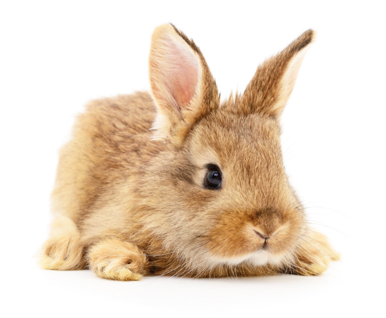 kanin tilvænning huskeliste