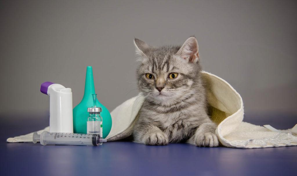 husmedicin til katte