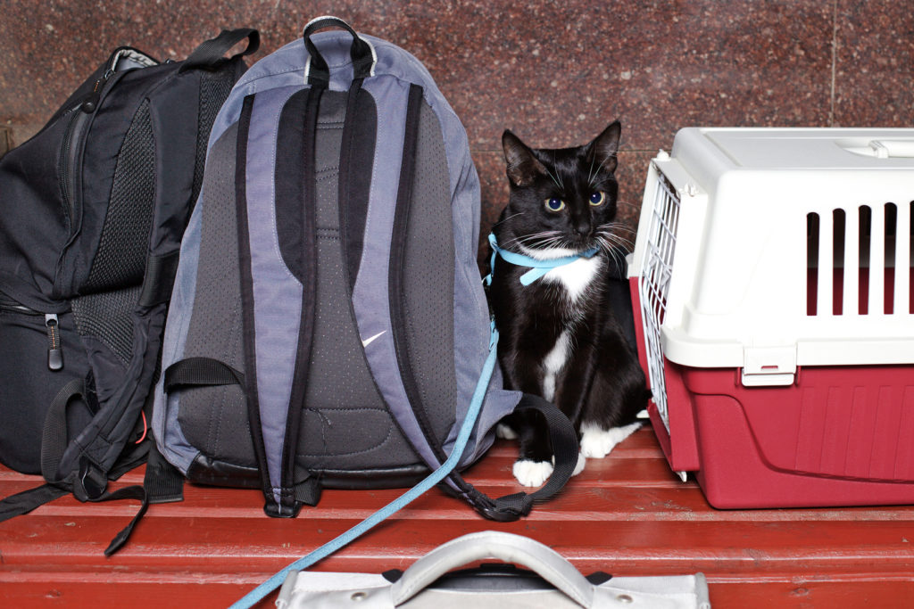 kat der skal med ud at rejse
