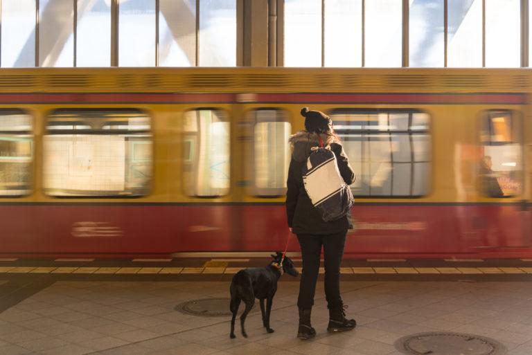 Zugreisen mit Hund