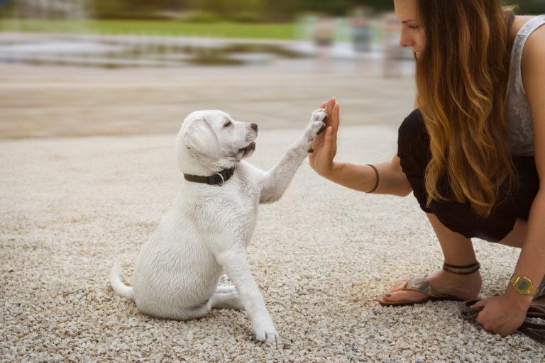 Hund gibt Pfötchen als Grundlagen der Welpenerziehung