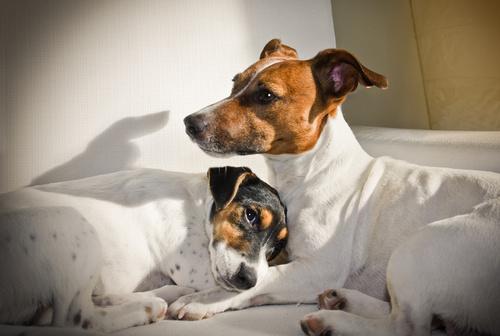 Verhütung bei Hund und Hündin
