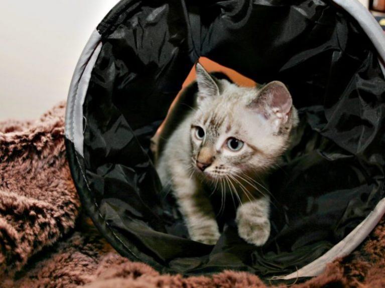 Katte agility