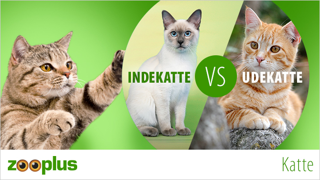 Indekatte vs Udekatte