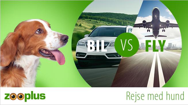Rejse med hund - Er bil eller fly nemmest?