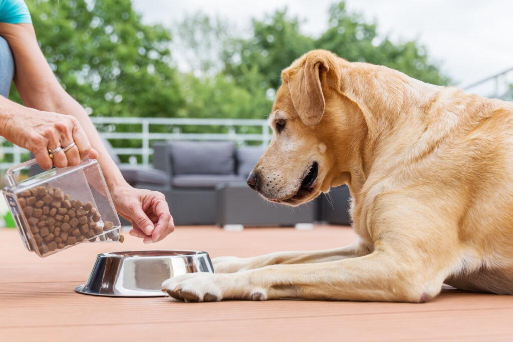 Hund spiser tørfoder og vådfoder