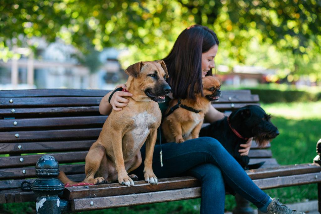 Glad hundesitter på en bænk
