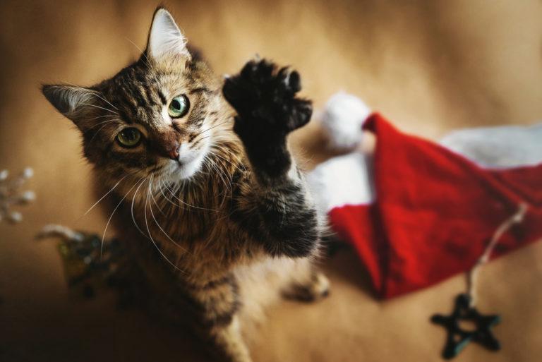 En kat ved siden af en nissehue