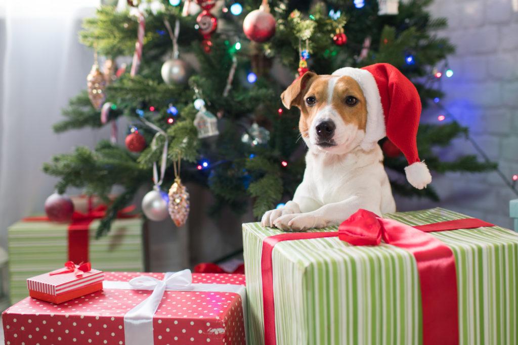 Julehund med nissehue