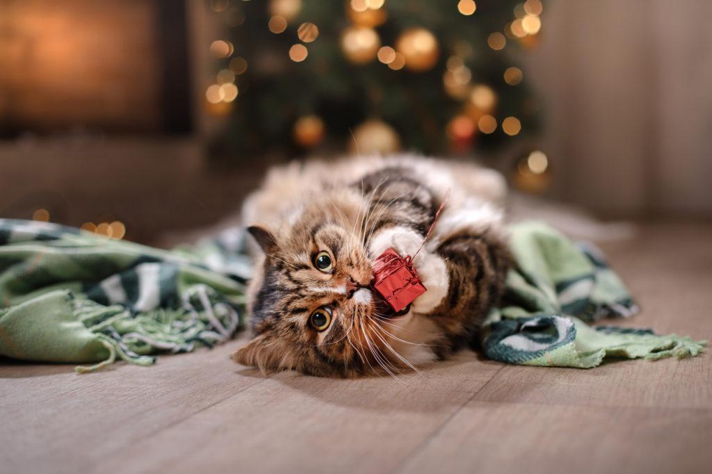 kat leger med julepynt