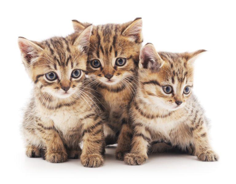 Kattenavne for 2018