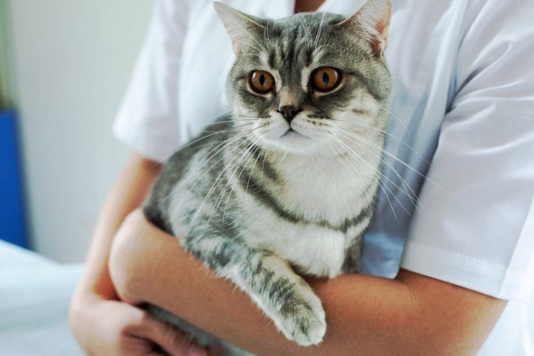 Skal min kat kastreres eller steriliseres