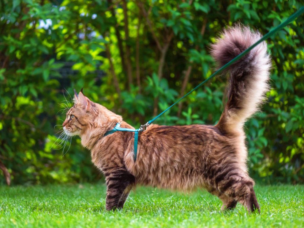 Stor flot kat