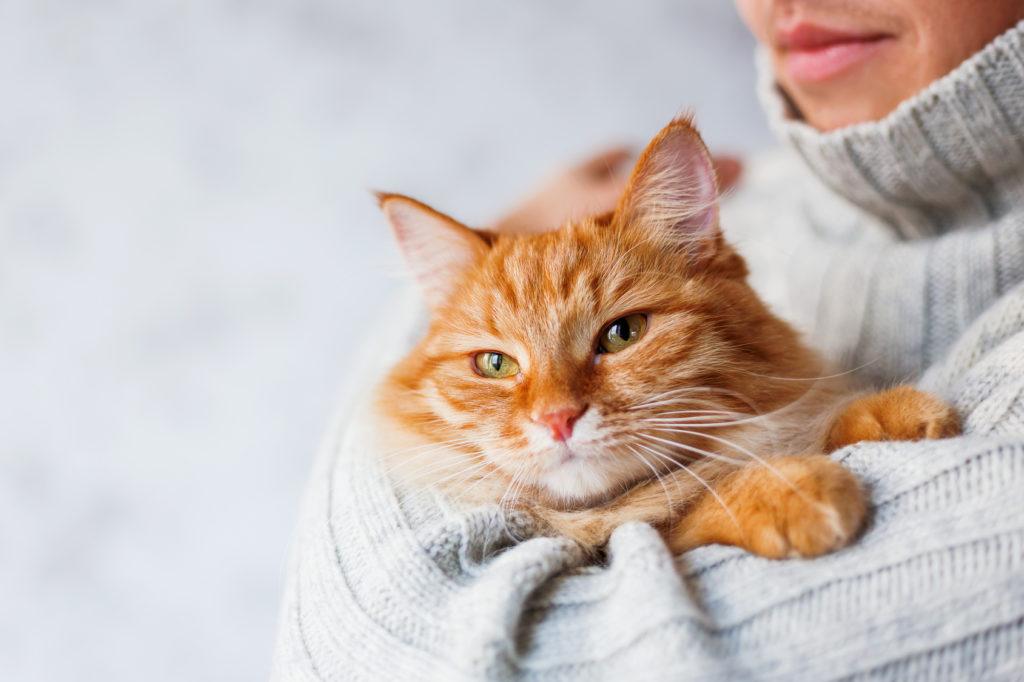 kat i armene på et menneske
