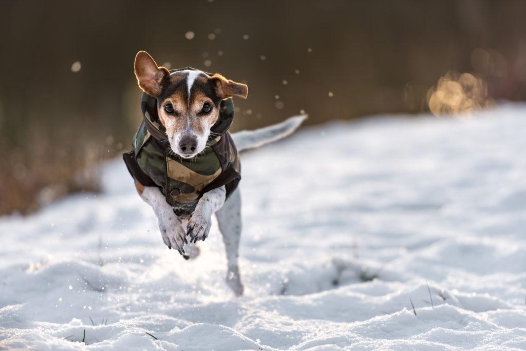 Glad hund i sne