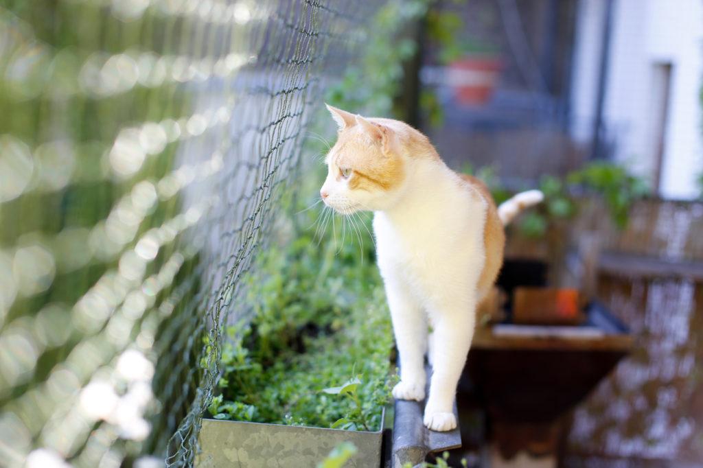 Kattenet