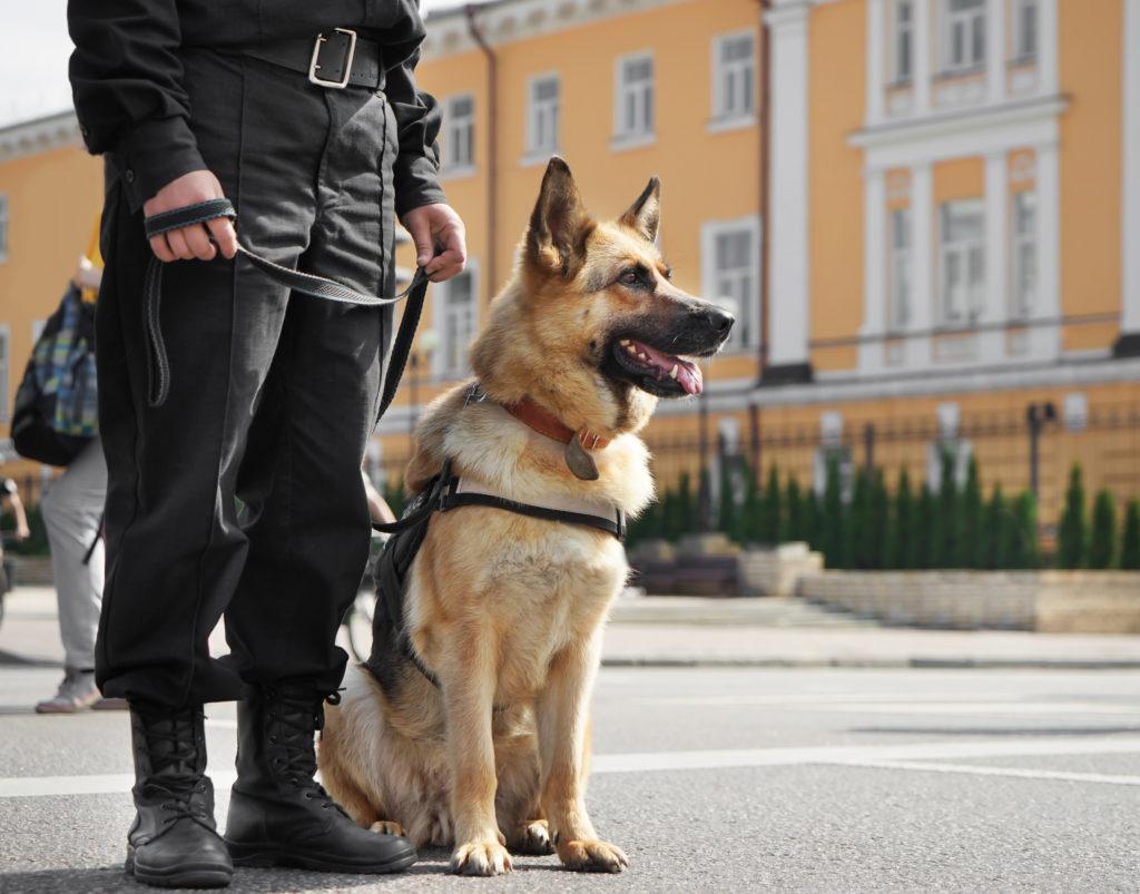Politihund med på patrulje