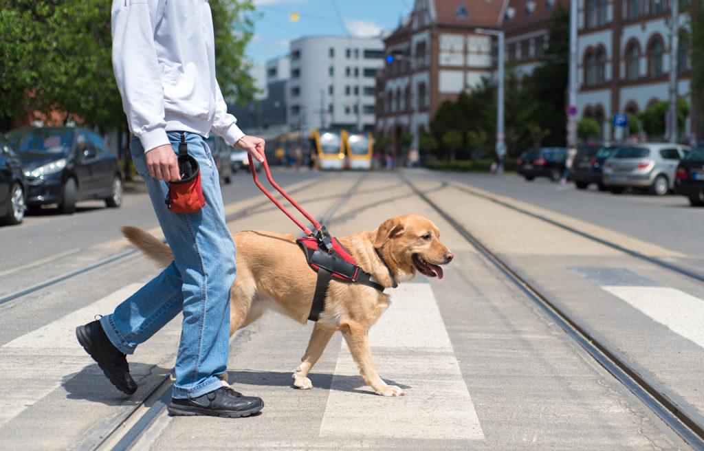 Førerhund der hjælper en blind person over en vej