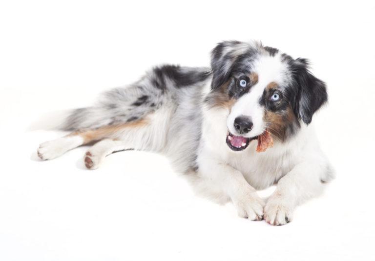 Tyggeben og tyggepinde til hunde