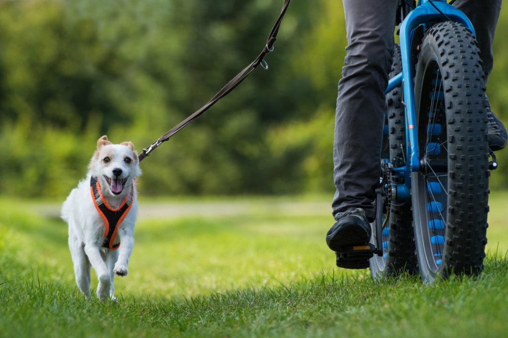 cykler med hund