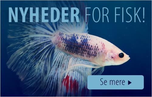 fisk_shop