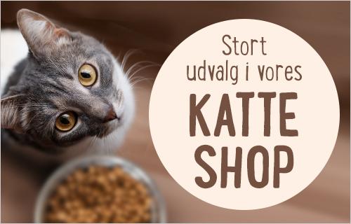 kat_shop