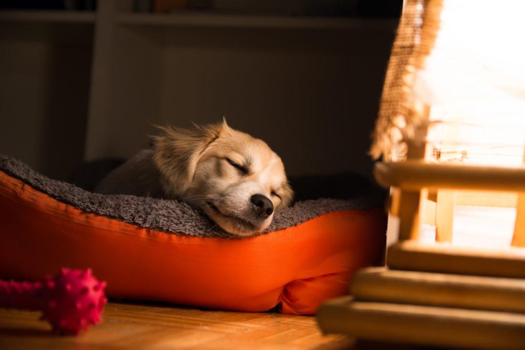 Hund sover i sin kurv