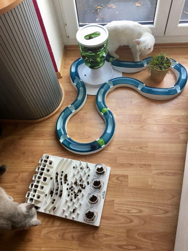 intelligenslegetøj til katte