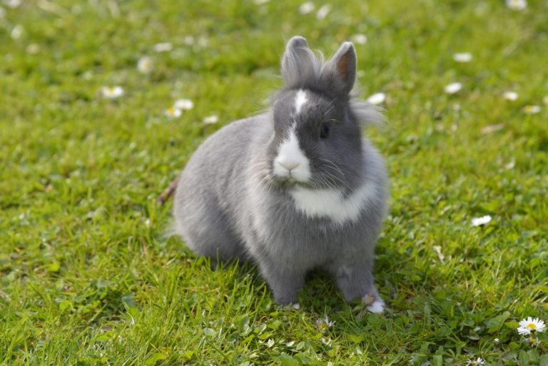 Kanin sidder på en græsplæne