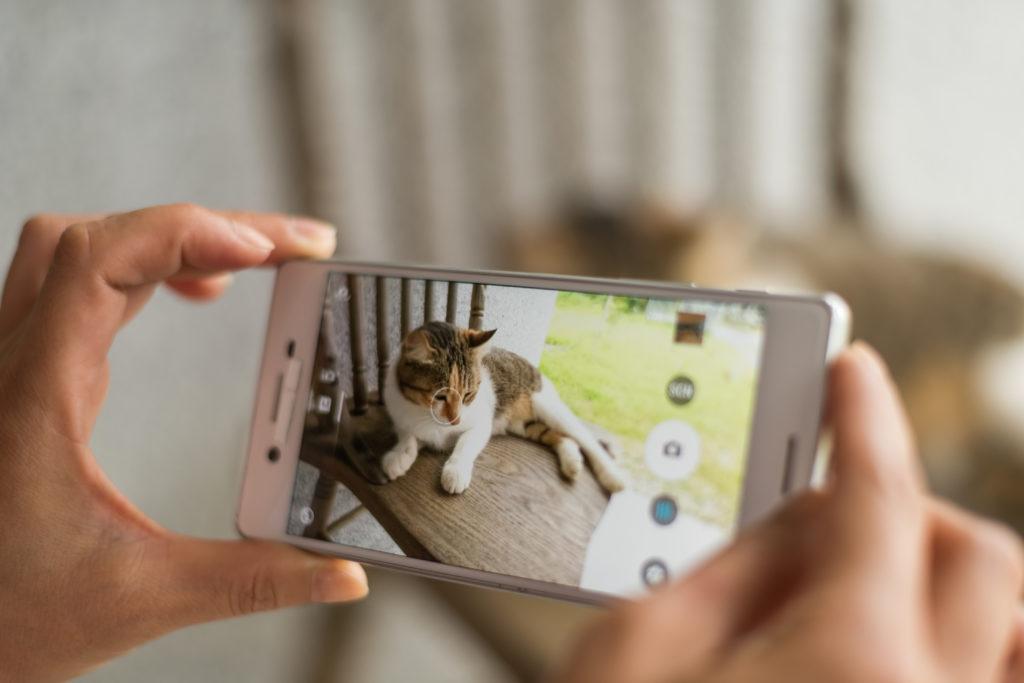Kattebillede med smartphone