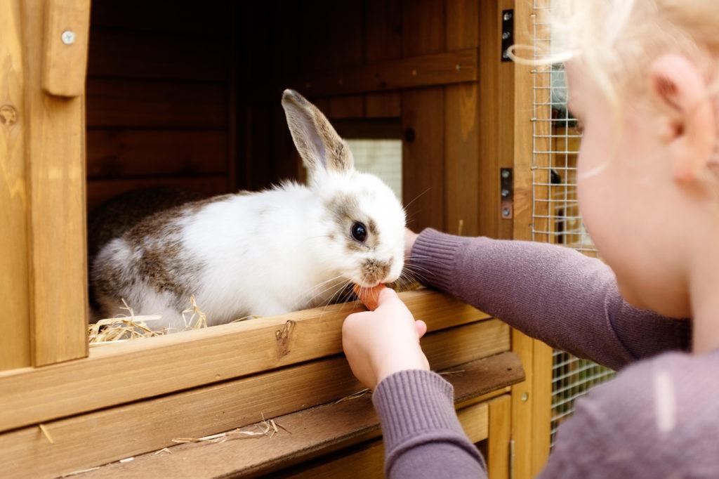 Lille kvinde kanin bliver fodret