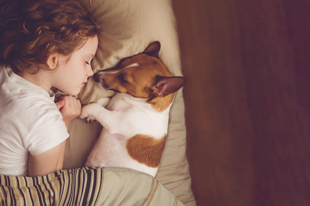 Pige sover med jack russell terrier