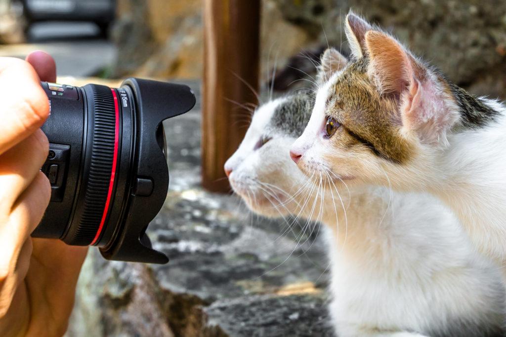 To katte bliver fotograferet