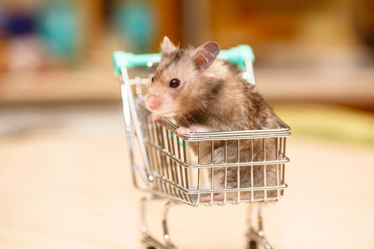 gnaver i indkøbskurv