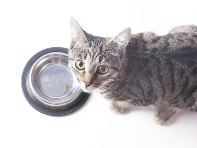 Kat med en skål af rustfrit stål