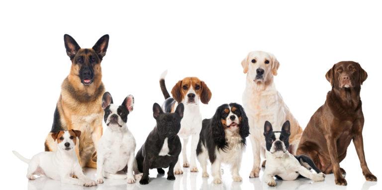 Racespecifikt foder til hunde