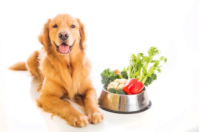 Vegetarisk hundefoder til en golden retriever