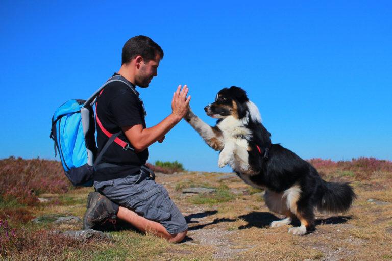 Mand og hund laver highfive