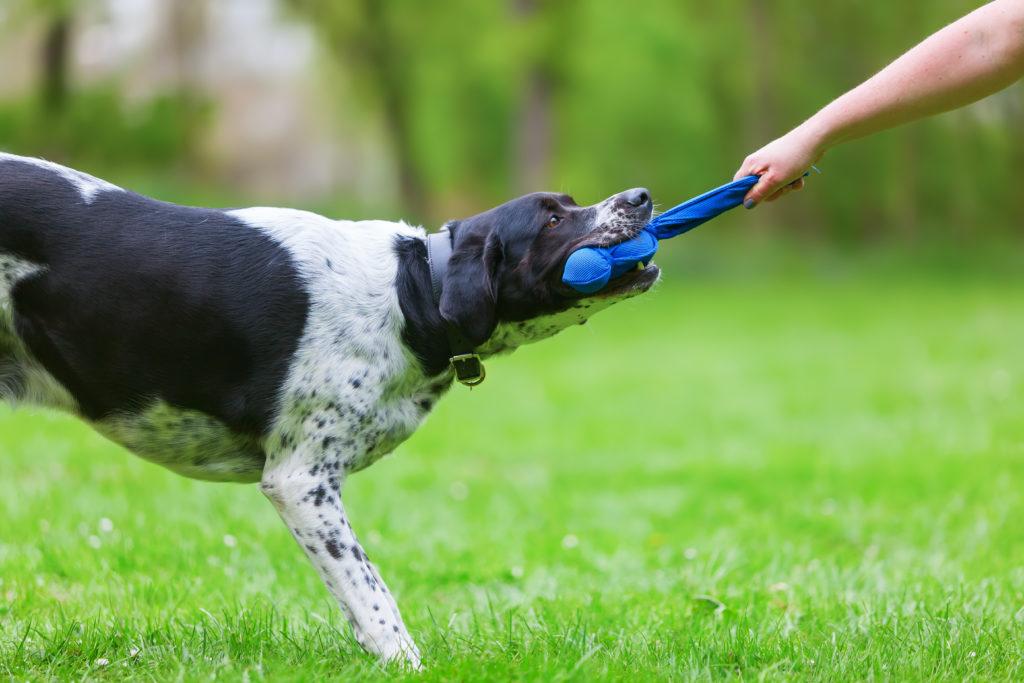 hundetræner med hund