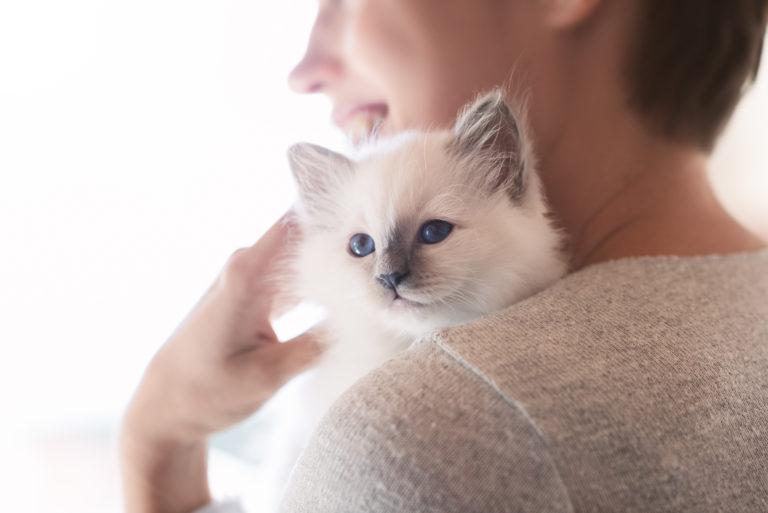 Katteopdrætter med killing