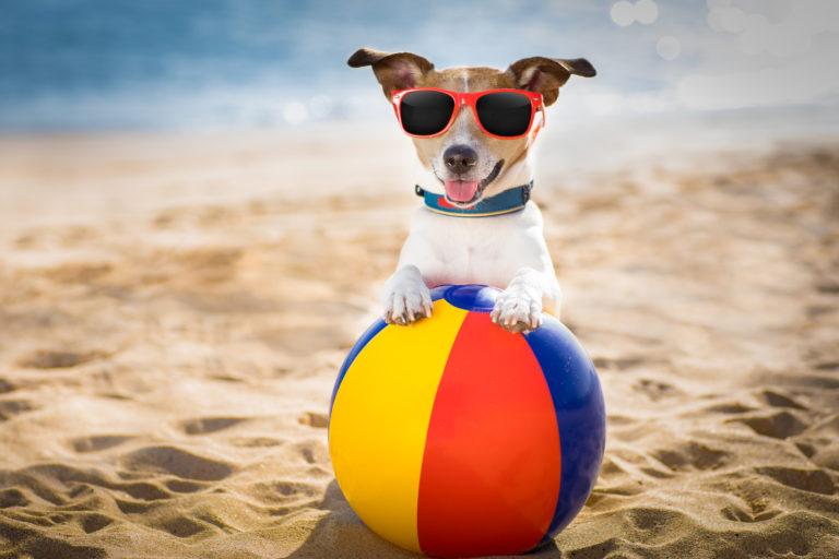 Sommertilbehør til din hund