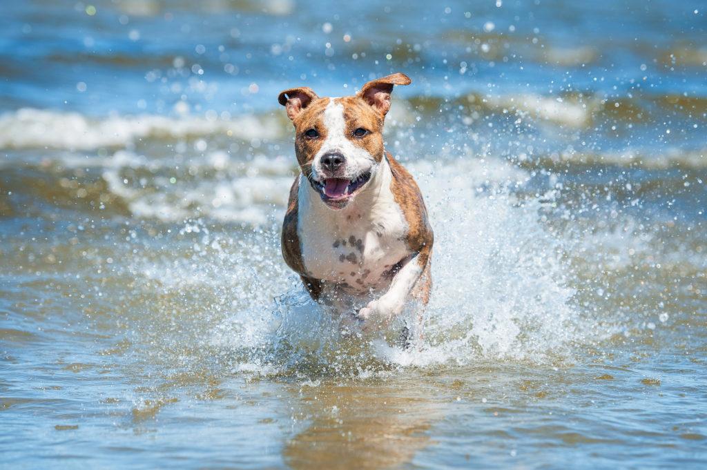 Glad hund løber i vand