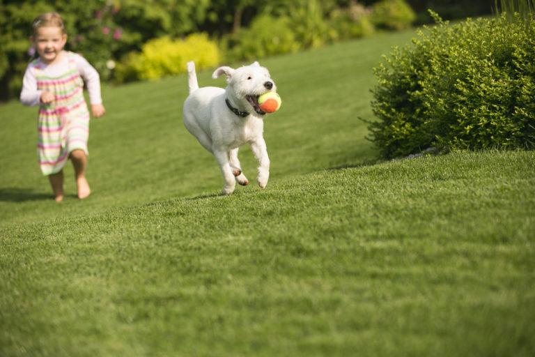 Hund med barn leger på græs