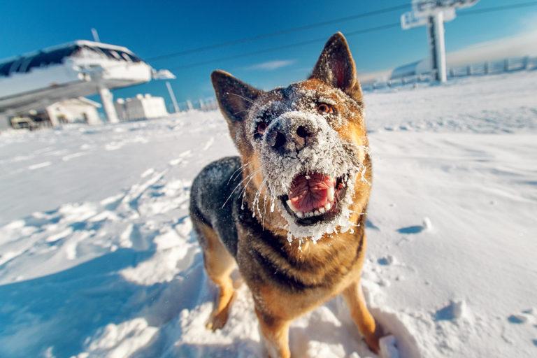 hundepleje om vinteren