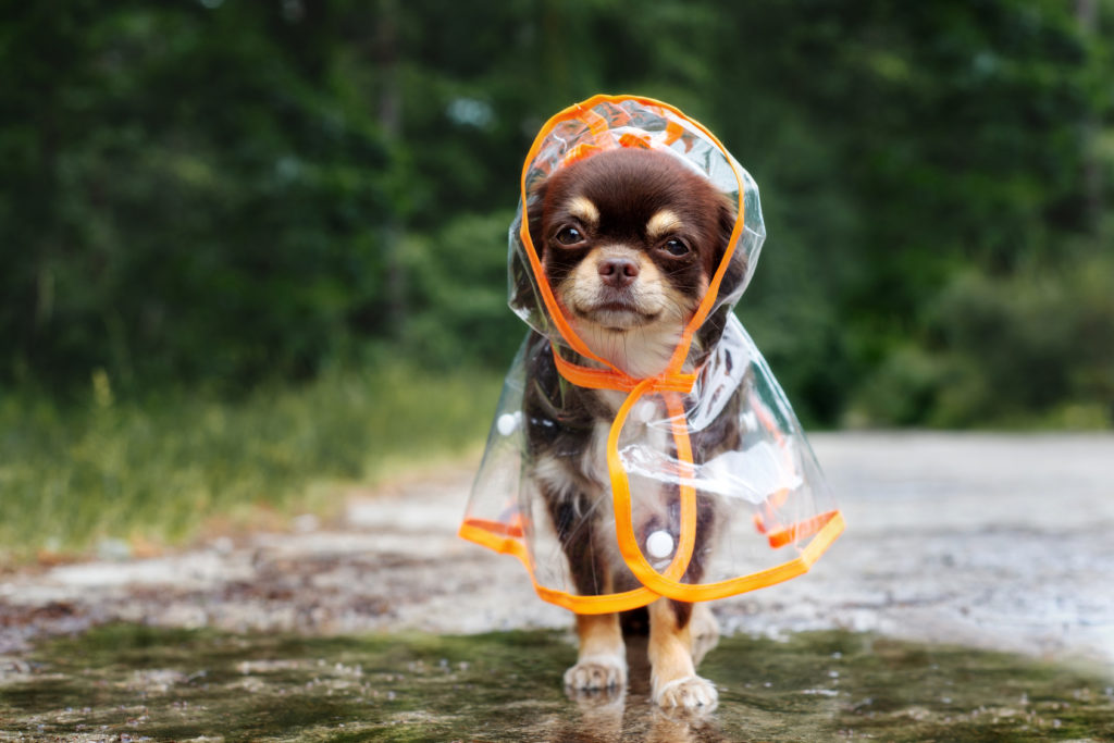 Tøj med regnjakke til hunde