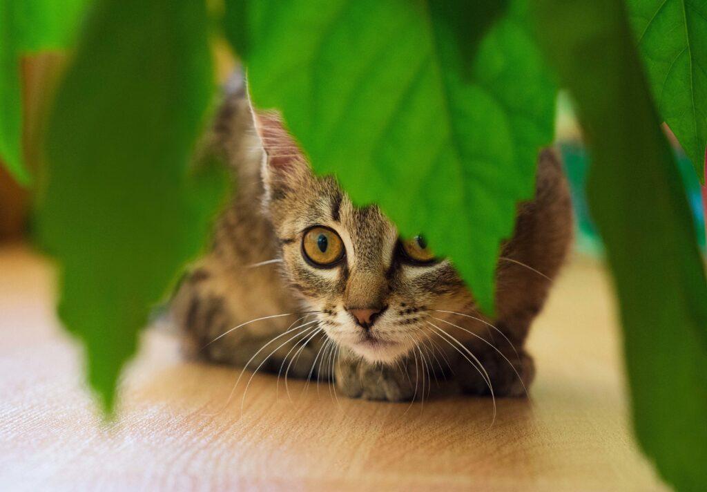 Katte tisser i potteplanter