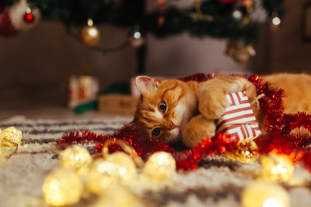 Rød kat leger med julegaver